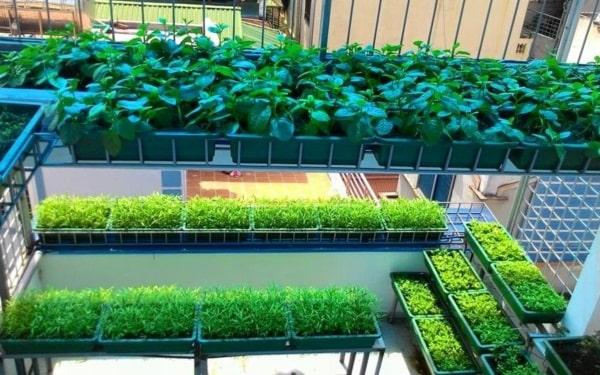 Dịch vụ thiết kế vườn rau sạch