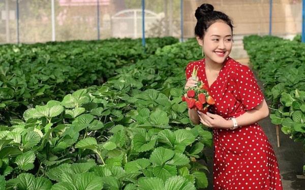 Ý tưởng kinh doanh nông nghiệp- Trồng dâu kết hợp với khu sinh thái
