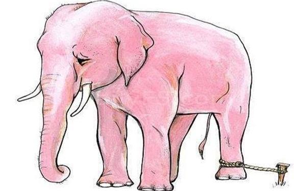 Sợi dây voi- Câu chuyện ý nghĩa về sự thành công