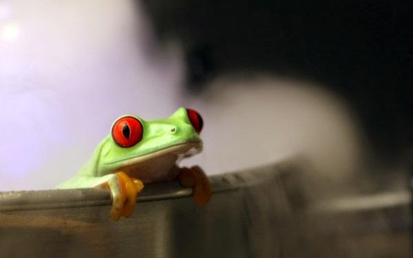 Câu chuyện thành công của chú ếch điếc đáng suy ngẫm