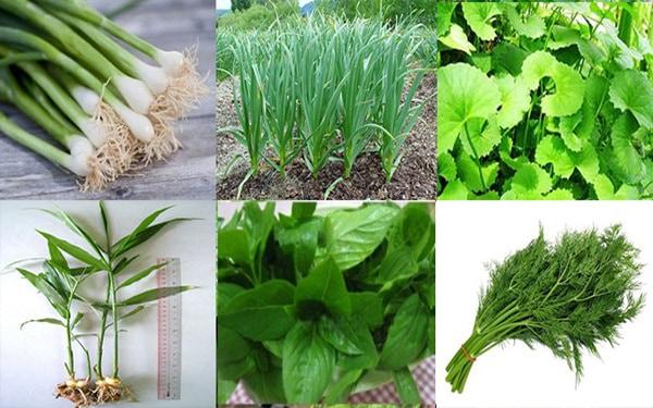 1001 cách làm giàu từ nông nghiệp - Trồng các loại cây gia vị