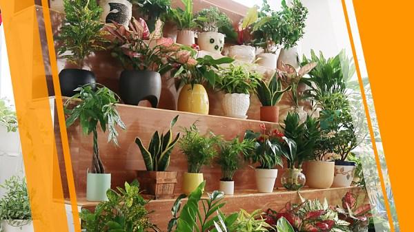 Nhập hàng từ các shop buôn sẽ có giá sỉ cao hơn so với nhập từ vườn