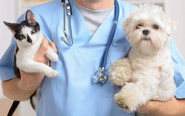 Kinh doanh dịch vụ chăm sóc thú cưng