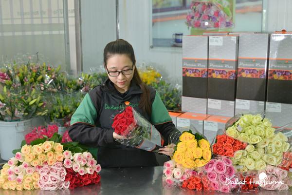 Hoa của Dalat Hasfarm đi khắp các cửa hàng Việt Nam và thế giới