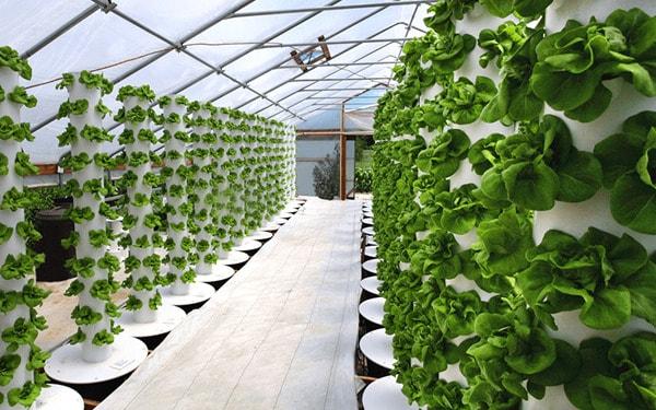 Mô hình trồng rau sạch phương pháp khí canh