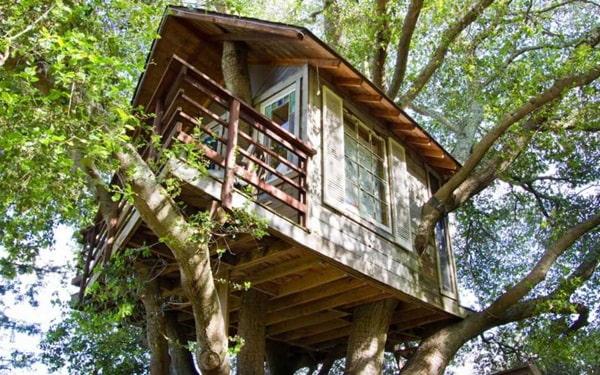Homestay trên cây