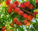 9 cách làm giàu từ nông nghiệp đơn giản nhất hiện nay
