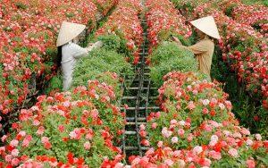 mua hoa tươi giá sỉ ở đâu