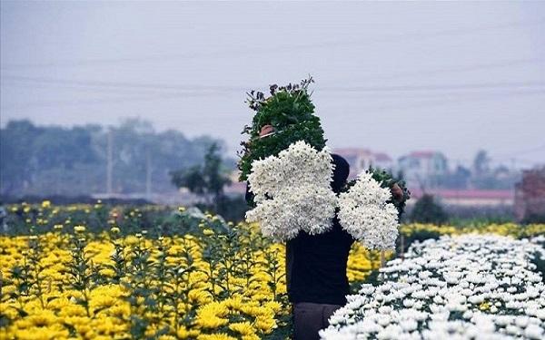 bán hoa tươi giá sỉ tại hà nội