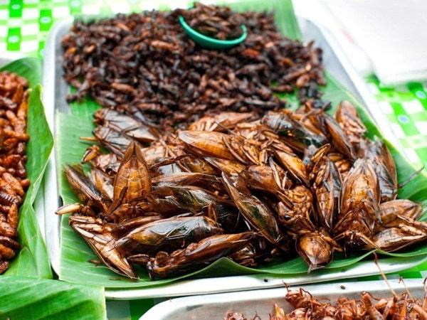 Kinh doanh các món ăn chế biến từ côn trùng