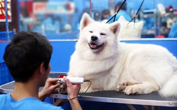 Kinh doanh dịch vụ làm đẹp cho thú cưng