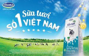 Muốn làm đại lý sữa Vinamilk cần những gì?